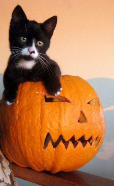 halloween cat (6)