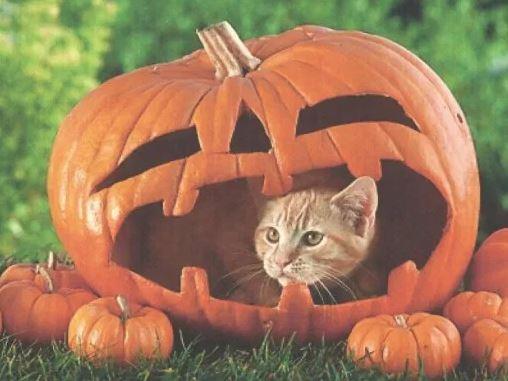 halloween cat (7)