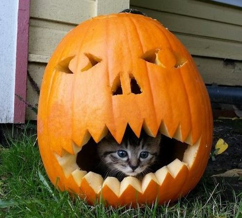 halloween cat (8)