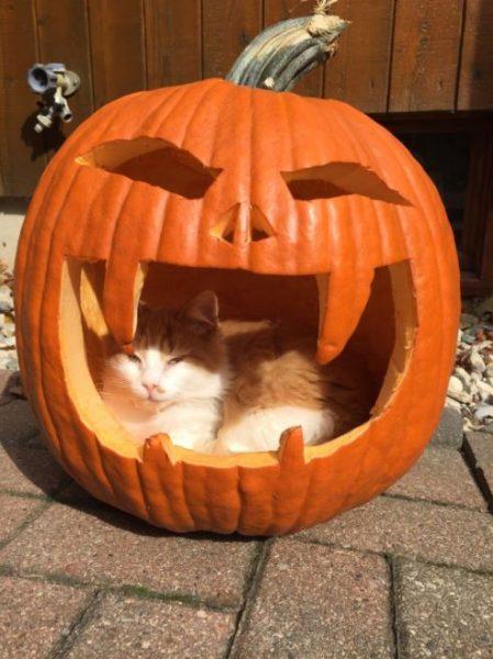 halloween cat (9)