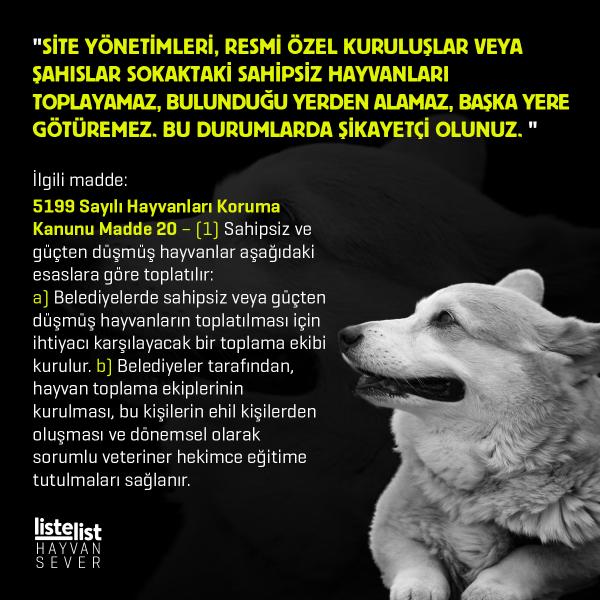 hayvan_haklari (1)