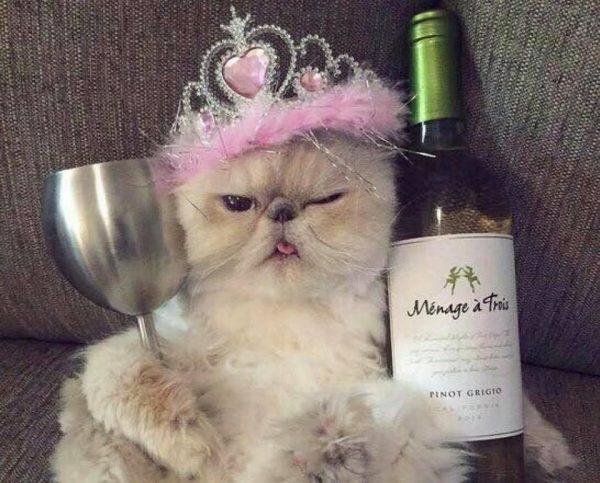 ikizler_kedi