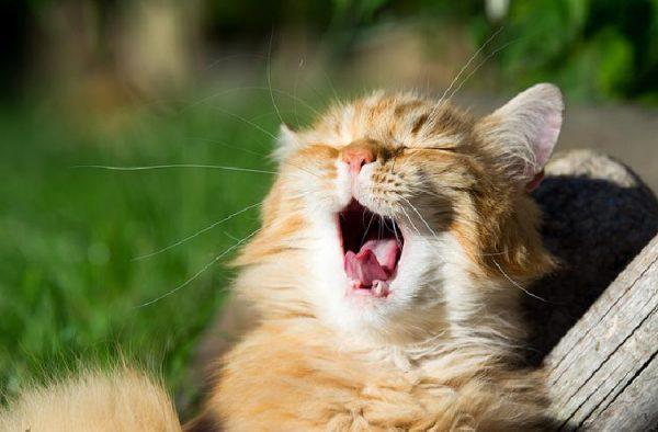 kedi_sesleri (7)