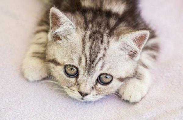 kedi_sesleri (8)