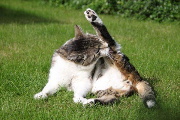 kediler_neden_yalanir (4)