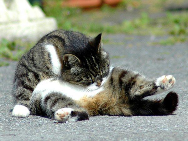 kediler_neden_yalanir (6)