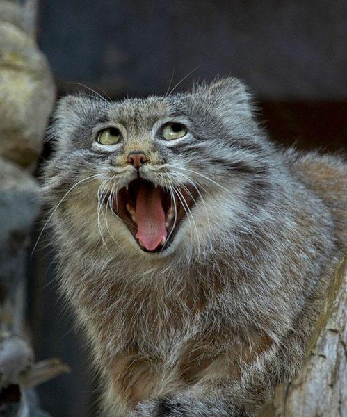 komik_hayvanlar_foto (20)