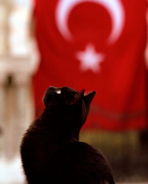 türk_bayrağı_vatansever_kedi (2)