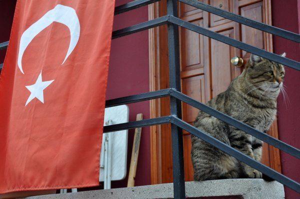 türk_bayrağı_vatansever_kedi (5)