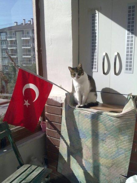 türk_bayrağı_vatansever_kedi (6)