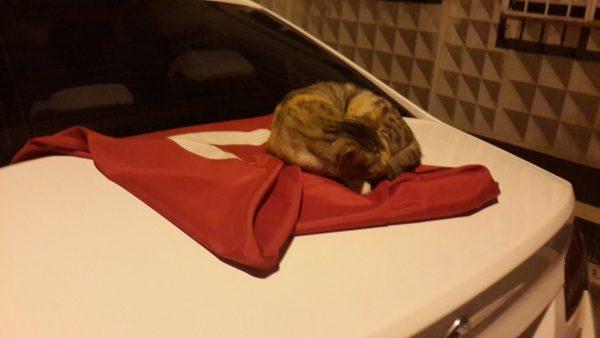 türk_bayrağı_vatansever_kedi (7)