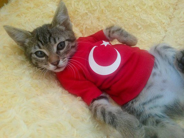 türk_bayrağı_vatansever_kedi (8)