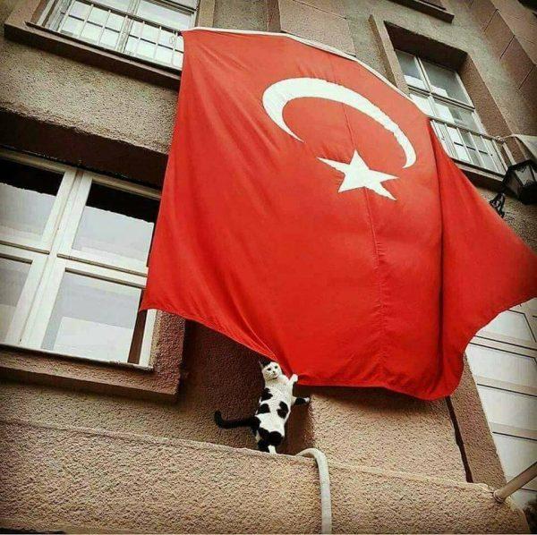 türk_bayrağı_vatansever_kedi (9)