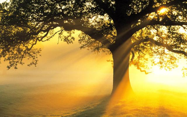 1440_sun-tree
