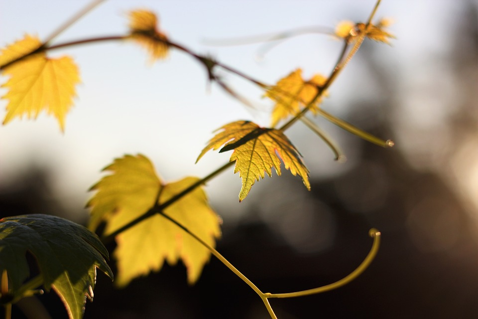 autumn-2638332_960_720