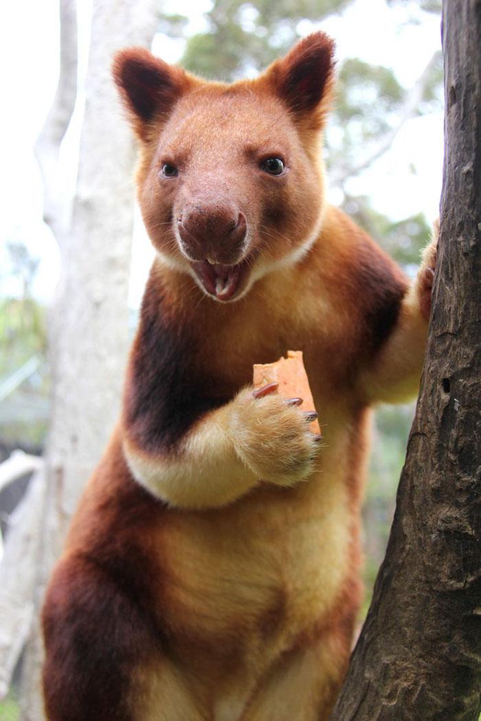 tree-kangaroo-251-5a1682ca6b13d__700