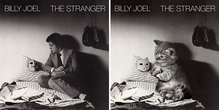 This-guy-created-very-cute-covers-of-the-music-world-replacing-singers-with-cats-5a2e4c0265d9d__700