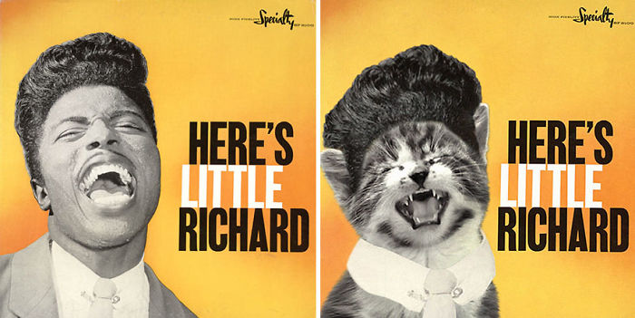 This-guy-created-very-cute-covers-of-the-music-world-replacing-singers-with-cats-5a2e4c0c0e166__700