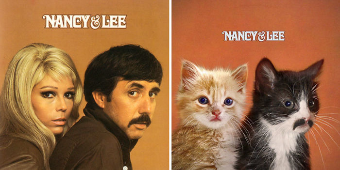 This-guy-created-very-cute-covers-of-the-music-world-replacing-singers-with-cats-5a2e54e2d9873__700