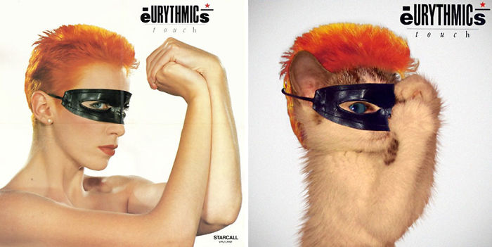 This-guy-created-very-cute-covers-of-the-music-world-replacing-singers-with-cats-5a2e54f0b2585__700