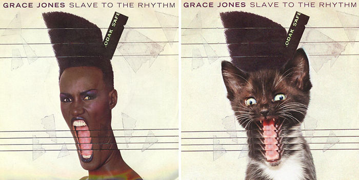 This-guy-created-very-cute-covers-of-the-music-world-replacing-singers-with-cats-5a2e627c0c99a__700