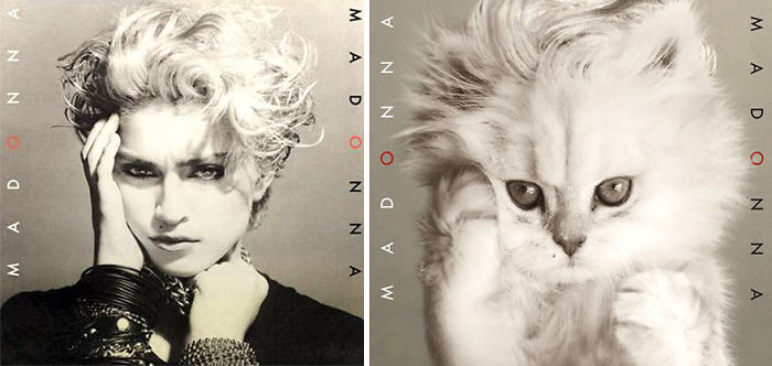 This-guy-created-very-cute-covers-of-the-music-world-replacing-singers-with-cats-5a2e804878ec6__700