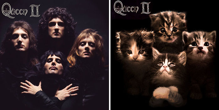 This-guy-created-very-cute-covers-of-the-music-world-replacing-singers-with-cats-5a2e805f632f4__700