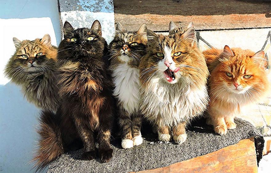 siberian-farm-cats-alla-lebedeva-27-5a3380fe09c68__880
