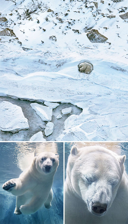 endangered-animals-tim-flach-1c-5a461319d0e13__700