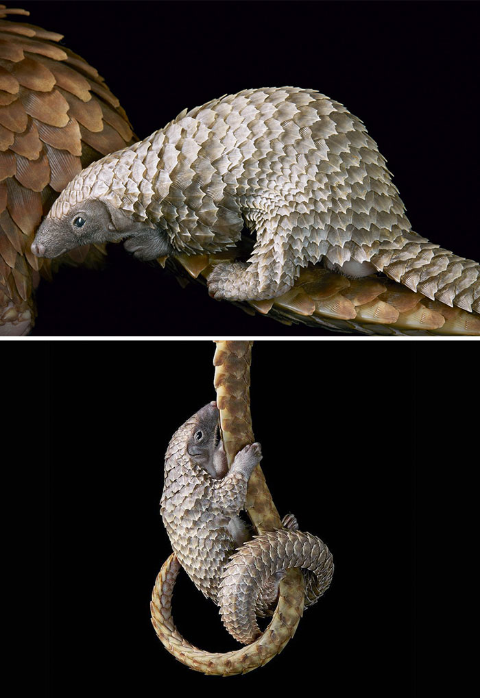 endangered-animals-tim-flach-5a45f4cf6c061__700