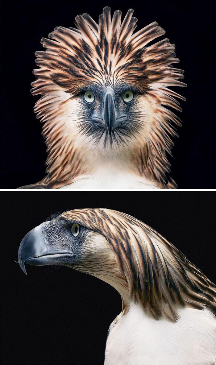 endangered-animals-tim-flach-5a45f72fa4ba0__700