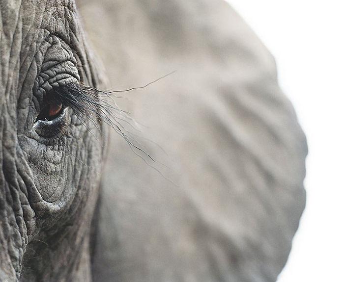 endangered-animals-tim-flach-5a45f83a7b7ad__700