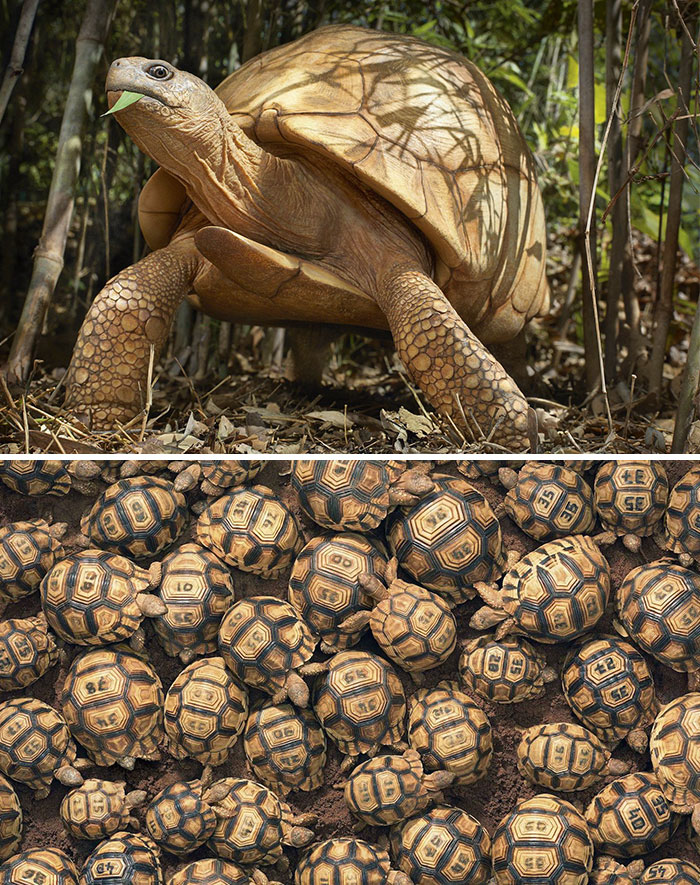 endangered-animals-tim-flach-5a45f94873897__700