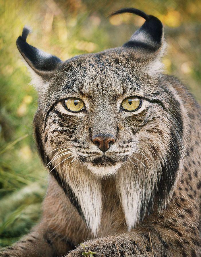 endangered-animals-tim-flach-5a45f975094ae__700