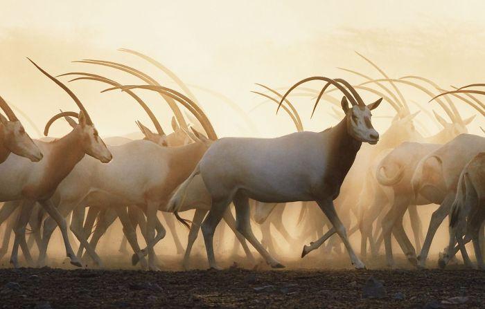 endangered-animals-tim-flach-5a45fac47e126__700