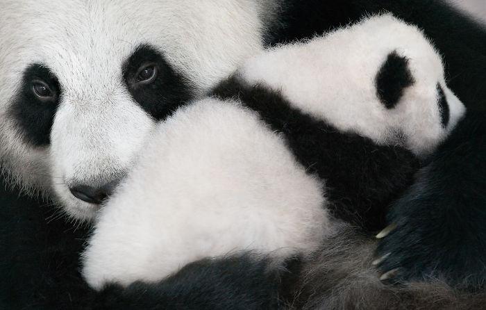 endangered-animals-tim-flach-5a45fda75b183__700