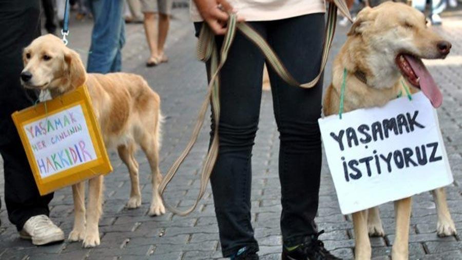 hayvan-haklari-yasasi