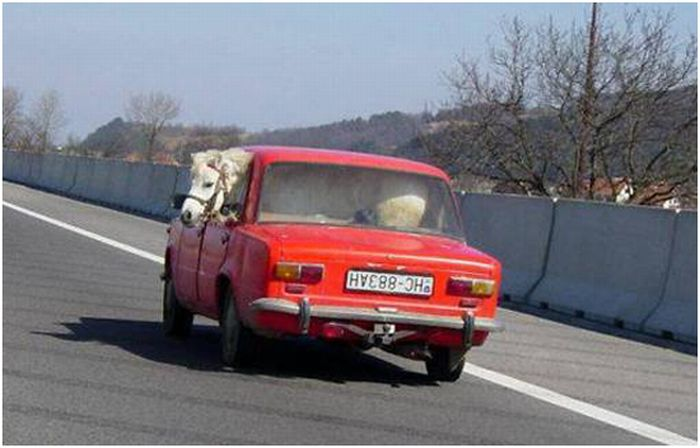 hilarious_ways_of_transportation_07