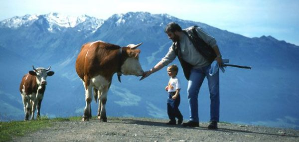Rick-Steves-Gimmelwald-Cow-Culture-631
