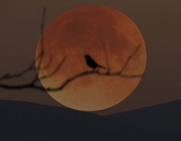 moon-21