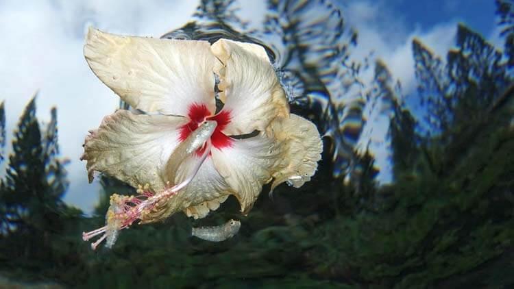 14-Flower_power