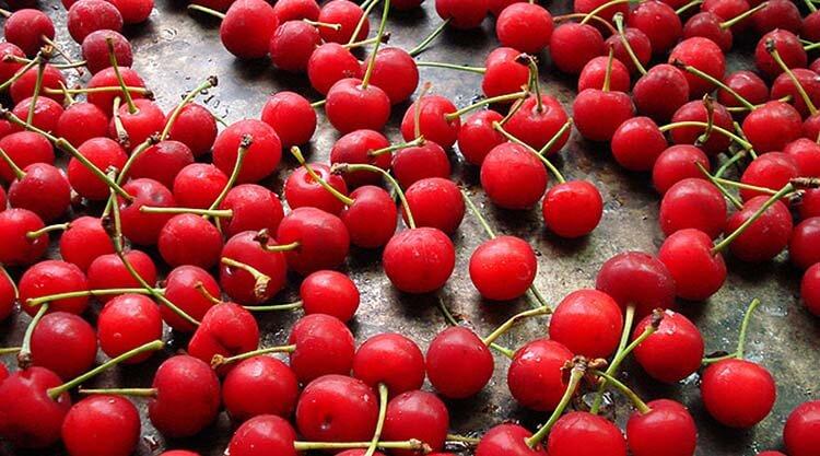 meyve şeker oranı kiraz