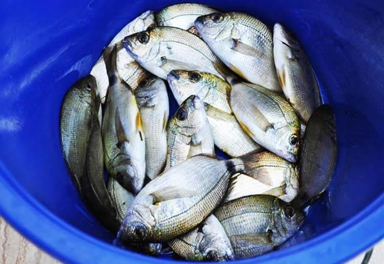 saros körfezi balıkçılık