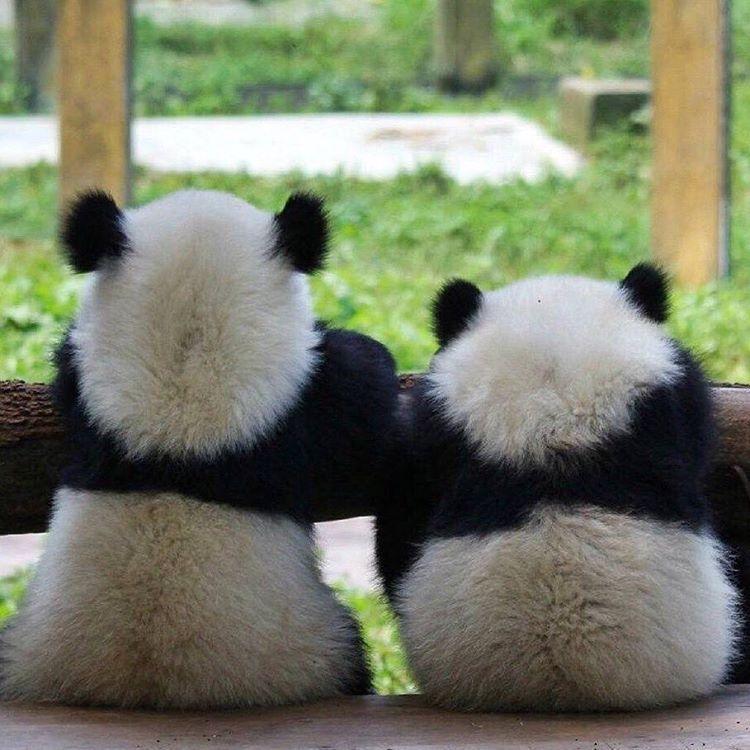 Lougantai, Zhou Zhi pandalar