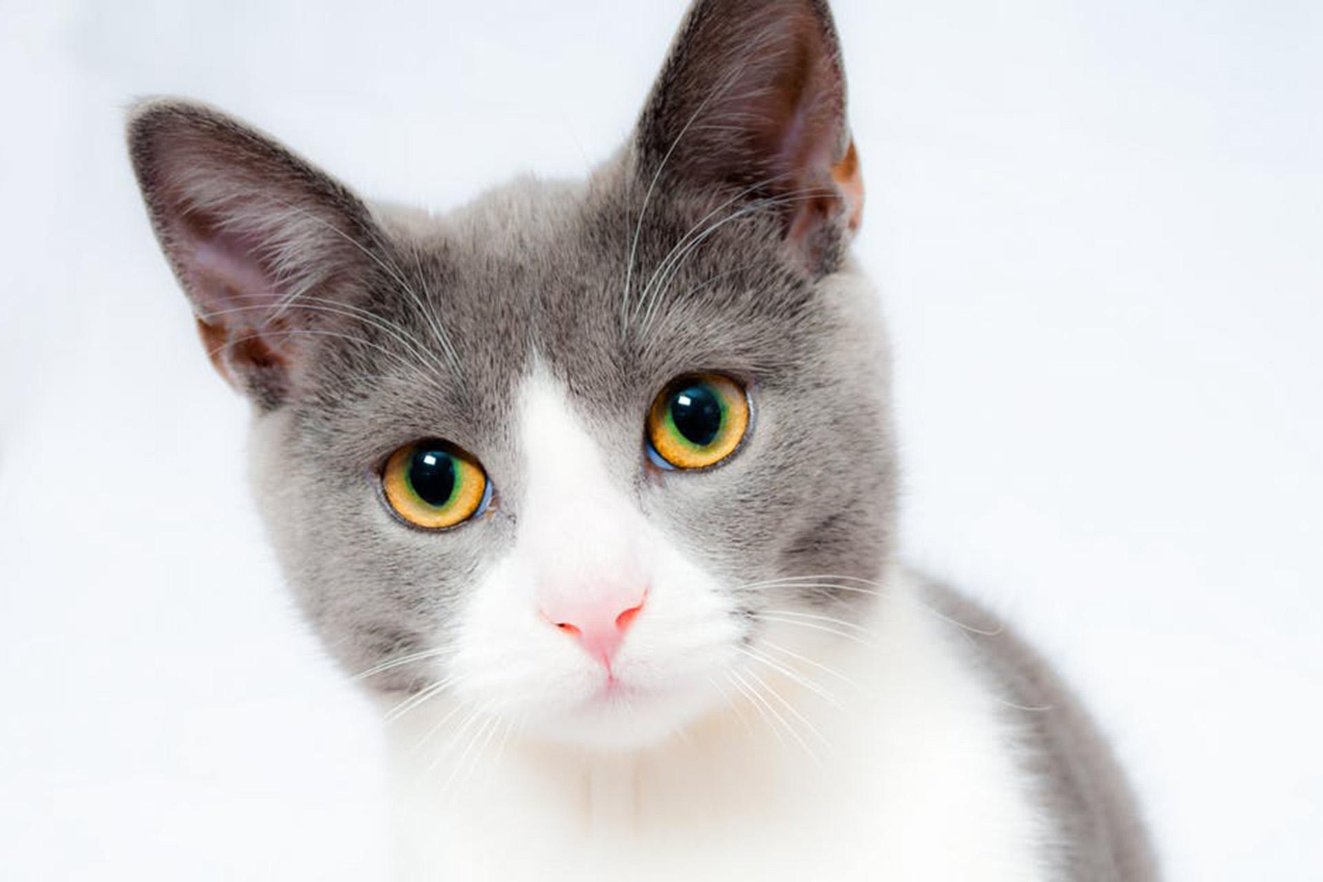 cat-pet-animal-domestic-104827.jpeg