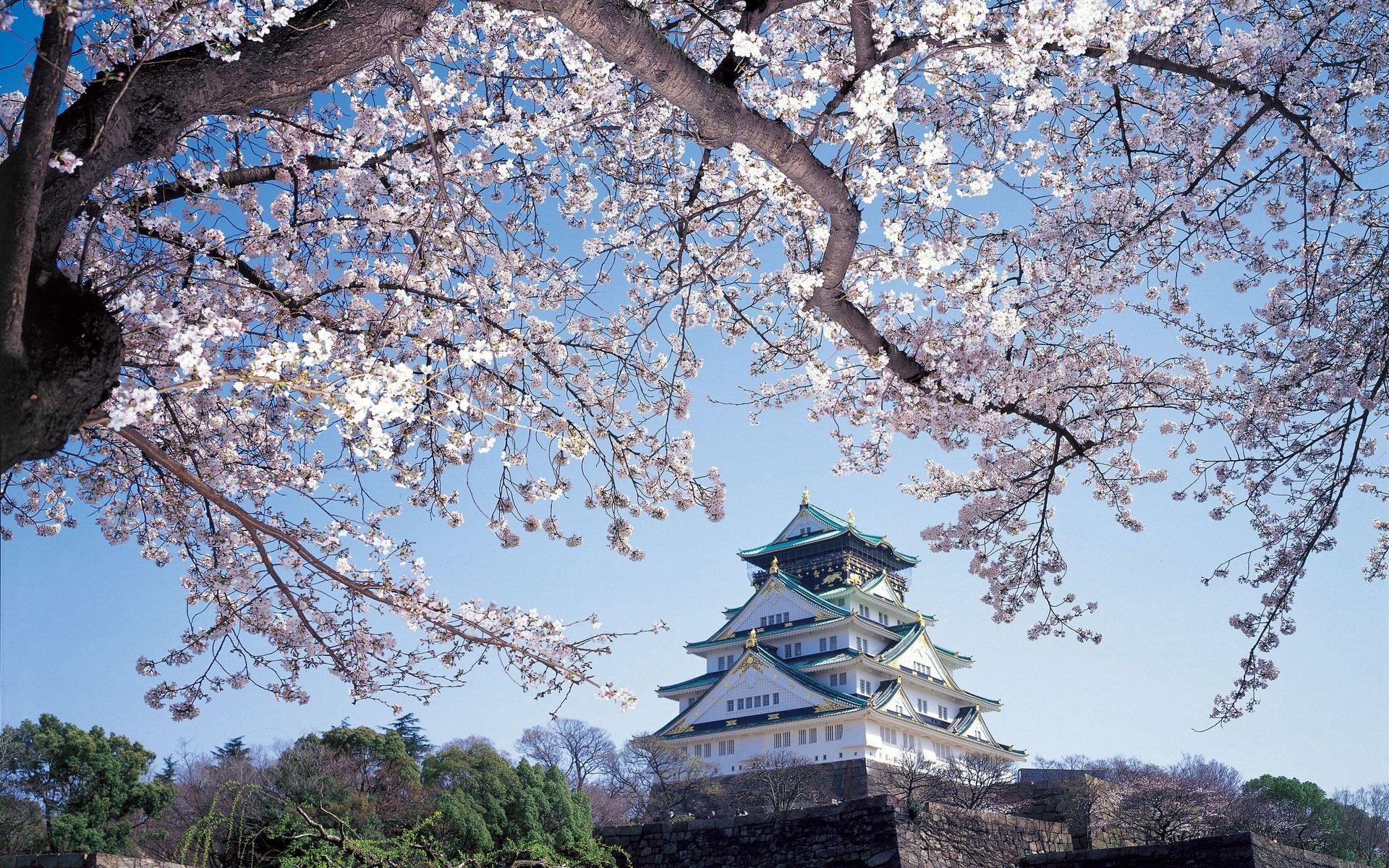 05132217-sakuraseason-cov_cover_1920x1200.jpg