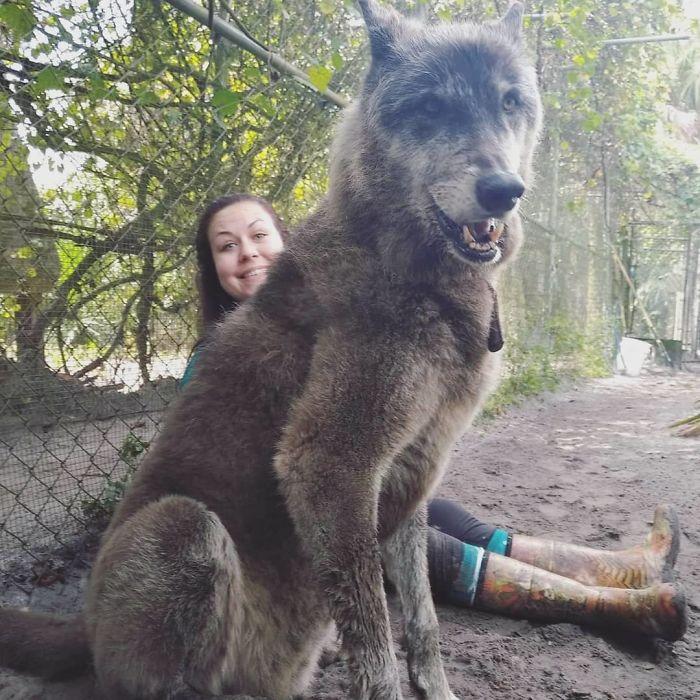 kurt köpeği