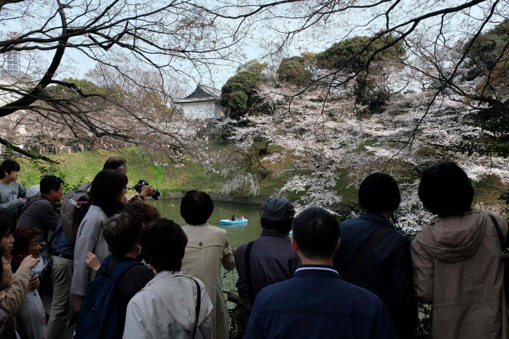 Giappone-lo-spettacolo-della-fioritura-dei-ciliegi-a-Tokyo-20-1024x682.jpg