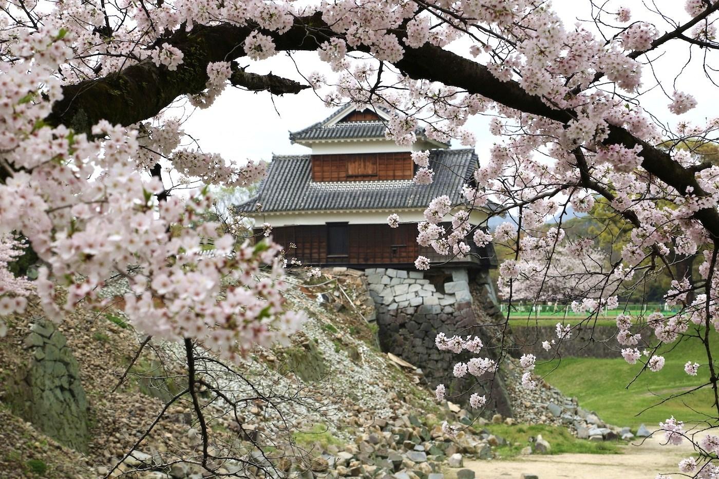 kumamoto-castle-sakura.jpg