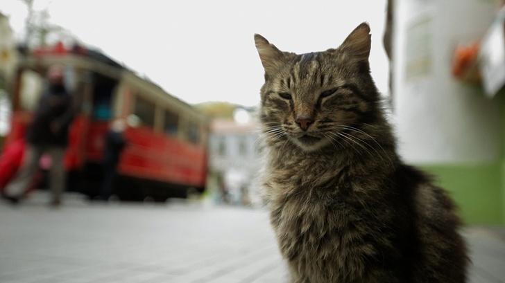 kedi filmi